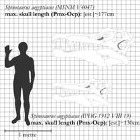 Spinosaurus aegyptiacus: new reconstruction by theropod1