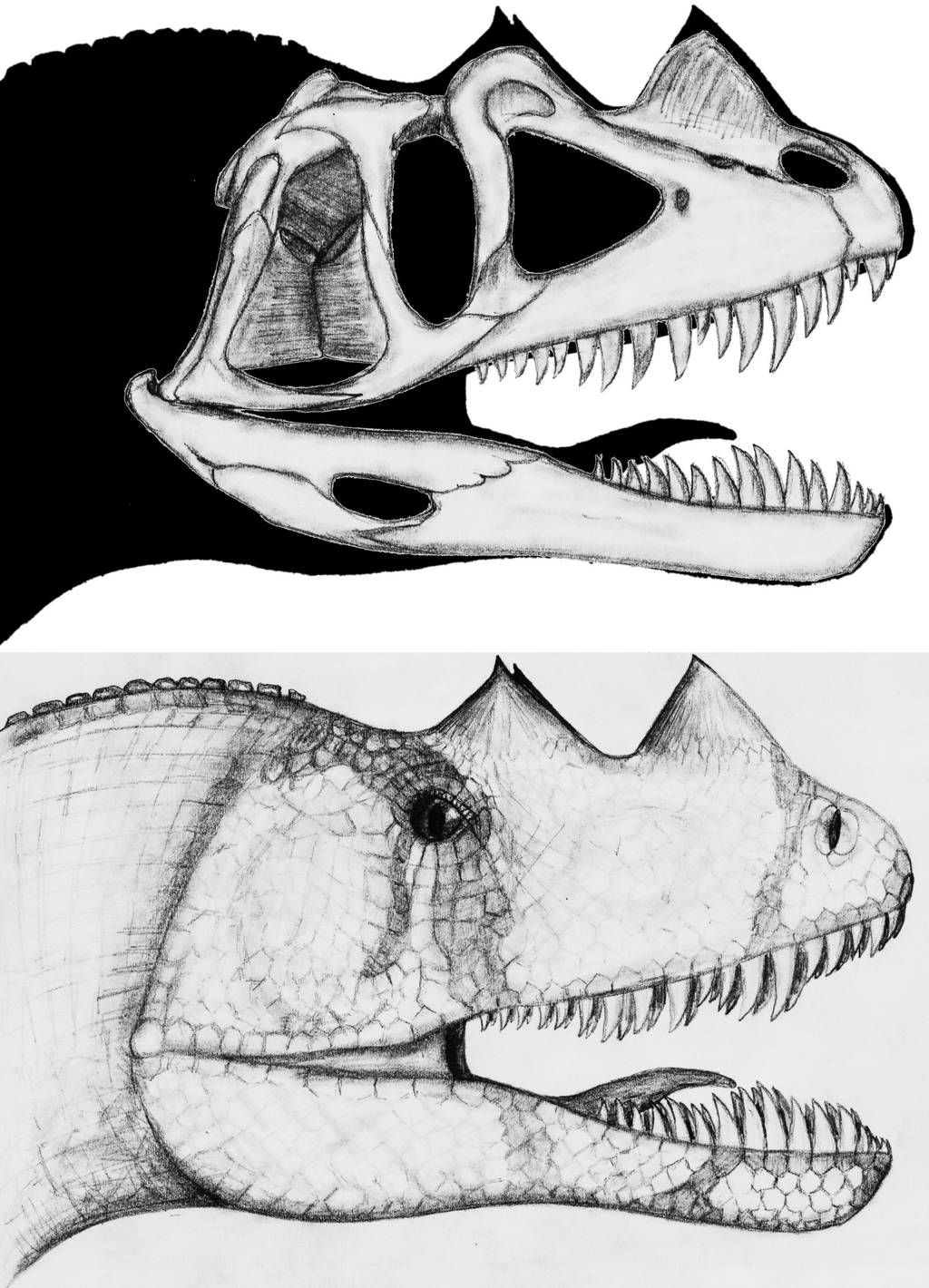 Ceratosaurus nasicornis by theropod1