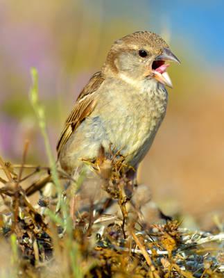 Birds04 by abelamario