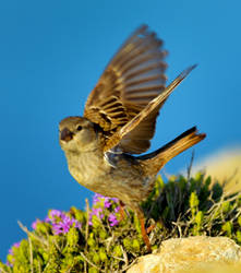 Birds22 by abelamario