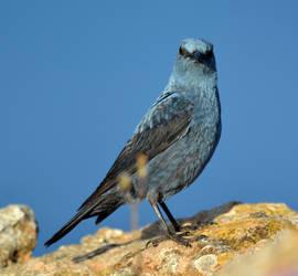 Birds23 by abelamario
