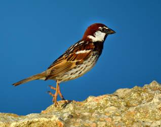 Birds24 by abelamario