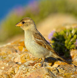Birds25 by abelamario