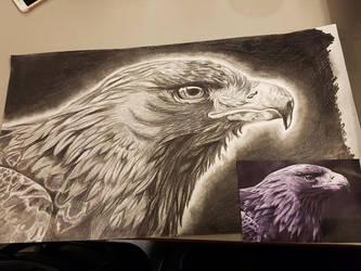 Beaky by xFalyn