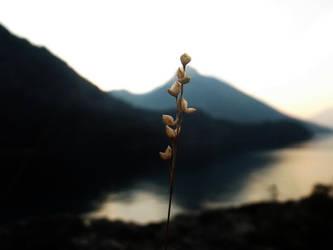 Flor en Macro by beraka