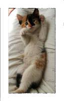 kittie by ydna333
