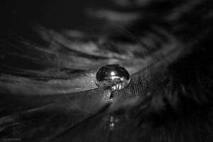 Black Pearl by hellfirediva