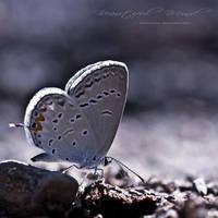 Beautiful Mind by hellfirediva