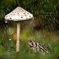 : my umbrella : by hellfirediva