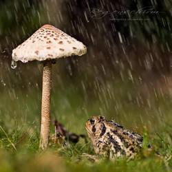 :: Regenschirm :: by hellfirediva