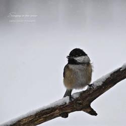 Singing in the Snow by hellfirediva