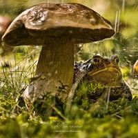 : Rain Shelter : by hellfirediva
