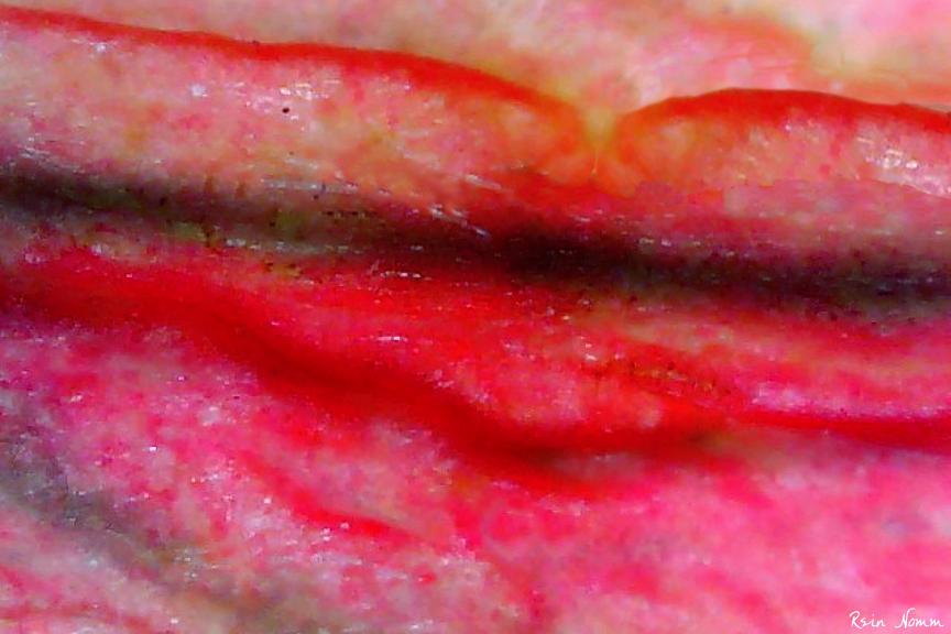 Petal Lips by ReinNomm