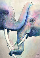Elephant Love by SuperPhazed