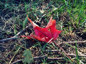 Harbinger of Fall by Rienet-Halun