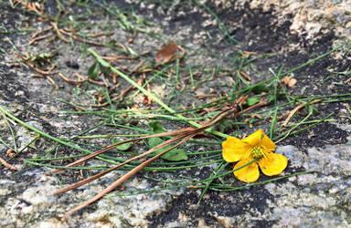 Yellow by Rienet-Halun