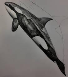 Soheila sketch by AmethystFH