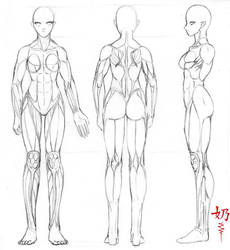 Study: Muscles F. by The-Nai
