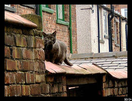 Alley Cat by katcat