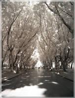 Hyde Park Trees - IR by JohnK222