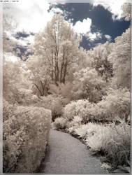 Path Of Wonder by JohnK222