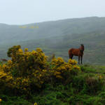 A wild horse in the rain by StoFF-1990