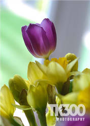 Spring Flowers by TonyTK300