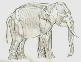 Asian Elephant Construct 2 by Troyodon