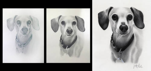 Dachshund Commissioned Drawing by ArteDiAmore