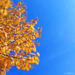 autumn square. by simoendli