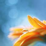 goldfish. by simoendli