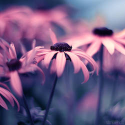 coral pink flowers square. by simoendli