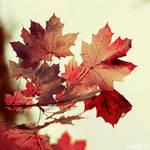 the magic of autumn. by simoendli