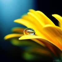 golden day. by simoendli