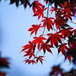 red dream. by simoendli