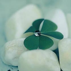 clover drop. by simoendli