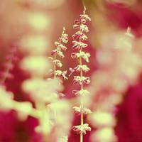 lavender love. by simoendli