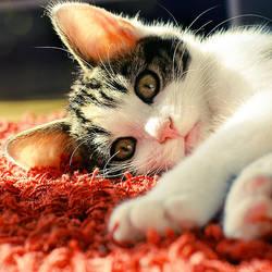 meow. by simoendli