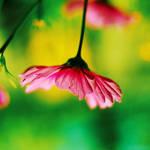 summer shade. by simoendli