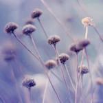 winter wonderland. by simoendli