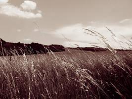 Landscape by Lunet