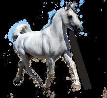 Grey Arabian Trotting Precut by xabovetheclouds