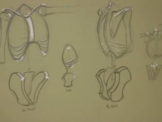 Anatomy sketch by Debbyie