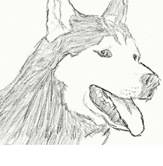 Siberian Husky Sketch By Distantecho9 On Deviantart