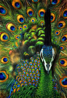 Green peafowl by Verenique