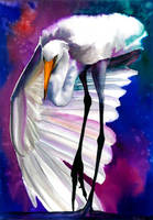Great egret by Verenique