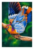 Fruit dove by Verenique