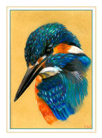 Kingfisher by Verenique