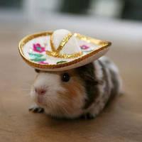 Mexican Guinea Pig by A-R-T-Q-U-E-E-N7227