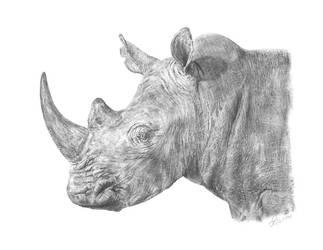 Rhino / Rhinoceros by CarlSyres